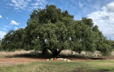 20 secret picnic spots in Melbourne